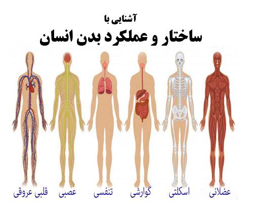 پاورپوینت آماده آشنایی با ساختار و عملکرد بدن انسان