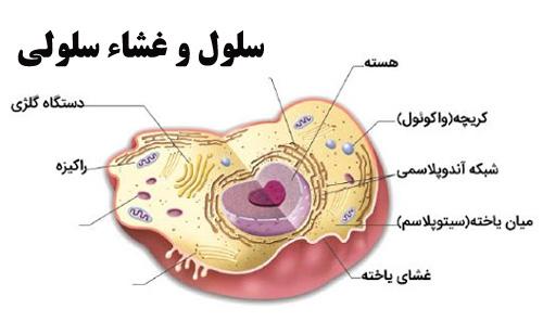 پاورپوینت با موضوع سلول و غشاء سلولی