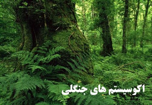 پاورپوینت اکوسیستم جنگل های مدیترانه ای و جنگل های ایران