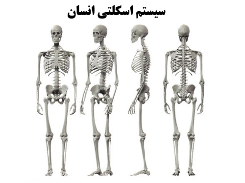 پاورپوینت سیستم اسکلتی انسان و عملکرد اجزای مختلف آن