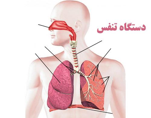 پاورپوینت دستگاه تنفسی و بررسی اجزا و عملکرد آن