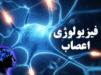پاورپوینت با موضوع فیزیولوژی اعصاب و سیستم عصبی بدن انسان