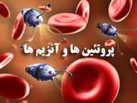 پاورپوینت پروتئين ها و آنزیم ها زیست شناسی و آزمایشگاه یک
